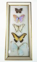 "Framed Mounted Butterfly Butterflies Domed Glass Animal Art  15.5"" x 6.75"""