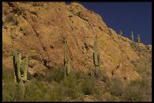199092 Saguaro Cactus TONTO forestali nazionali Apache Trail Arizona A4 FOTO STAMPA