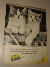 KODAK PELLICOLA FOTOGRAFIA GATTI=ANNI '50=PUBBLICITA=ADVERTISING=WERBUNG=591