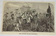 1884 magazine engraving ~ VINTAGE IN BAS-LANGUEDOC