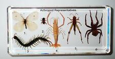 6 Arthropod Set Prawn Grasshopper Centipede Bee Butterfly Spider Specimen