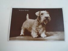 SEALYHAM TERRIER Real Photo Postcard Franked+Stamped 1936 §A2189