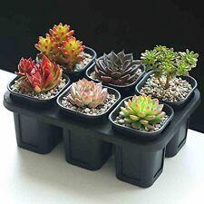 6Pack Mini Succulent Planter Plastic Flower Cactus Container Plant Nursery Pot