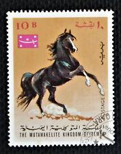 Arabian Horse Yemen, 10B