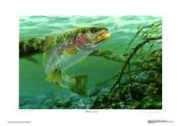 """Swim Meet"" Rainbow Trout  By Randy McGovern Signed & Numbered"