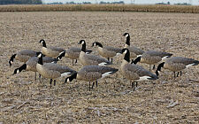 Avian-X AXF Lesser Outfitter Pack (12)  W/ 12 Slot Bag Canada Goose Hunting New!