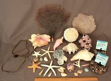 Lot of Sea Shells Polished River Rocks and a Conch Shell Night Light