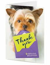 Yorkshire Terrier dog delivers special THANK YOU message greeting card