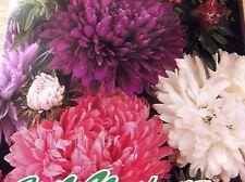 Juliaster Mischung, einjährig, Blumensamen, Schnittblume ca.80 Samen, Blumen