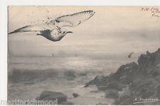 Birds, M. Andreossi, 1903 Art Postcard #2, B558