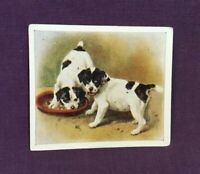 *Advertising Tobacco Dog Card GODFREY PHILLIPS Smooth Fox Terrier CIGARETTE