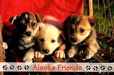 Alaska Friends Postcard Puppies Tim Reddington Racing Kennels Unposted New