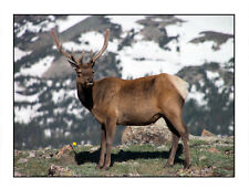 Rocky Mountain Ramblers - Set of 6 Blank Cards - FREE Shipping