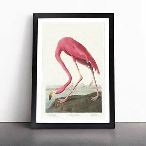 Pink Flamingo Landscape Bird John James Audubon Framed Picture Print Wall Art