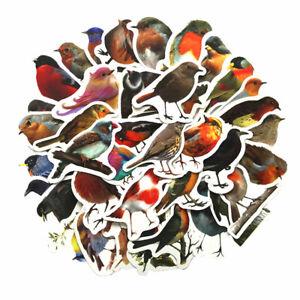 40Pcs/set Robin Birds Decorative Stickers Adhesive Stickers DIY Diary Station TC