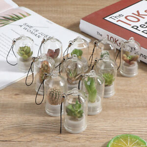 Kaktus Miniatur Sukkulente Kakteen Terrarium Tragbare Halskette Live Plant D BOD