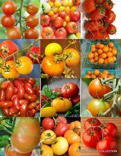 Tomato Mix, heirloom vegetable organic fruit exotic edible garden seed 25 seeds