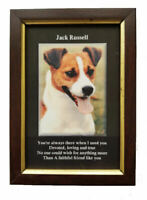 Glazed Wooden Framed Picture of a Jack Russell Dog  6''x 4'' New