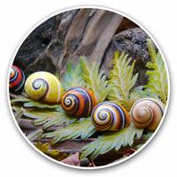 "Colour Snail Shells Garden Small Photograph 6/"" x 4/"" Art Print Photo Gift #15959"