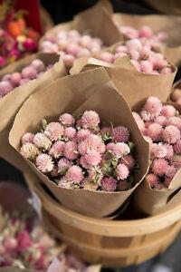 3,500+ MEDICINAL SEEDS: Alsike Pink Clover Herb Flower EASY, BULK, FREE SHIPPING