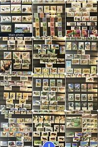 Wildlife Collection On 12 Page: Birds,butterfly,dogs,cats,dinosaurs,WWF,mammals.