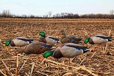 Avian-X Top Flight Full Body Mallards (w/6 Slot Bag) Waterfowl Duck Hunting NEW!