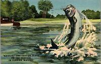 Hooked Tarpon Fishing Palm Beach Florida  Fish 1952 Vintage Postcard AA-002
