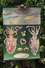 Rollkarte Schulwandkarte Wandkarte Tintenfisch Tiere Lehrtafel Karte Schulkarte