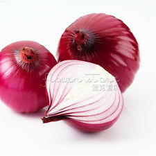 200 Onion Seeds Common Quality vegetables  High nutritional value TT364