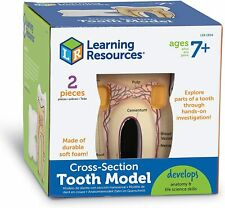 NEW Learning Resources Cross Section Tooth Model Anatomy Dental Model Kids Child