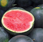 20+Black Diamond Watermelon Seeds Average Fruit WT 30-50lbs USA