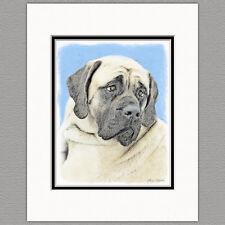 English Mastiff Dog Fawn Original Art Print 8x10 Matted to 11x14