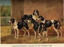 Hounds of the World, Jardine, 1937 dogs, hunting GREAT!