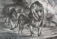 Lions.....wood engraving...1860s