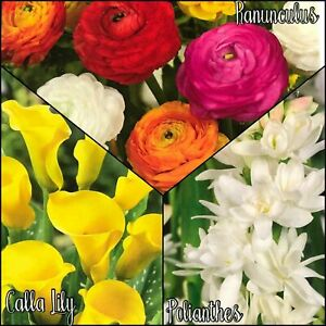 Mixed Garden Flower Bulbs Calla Lily Ranunculus Polianthes Spring Plants Flowers