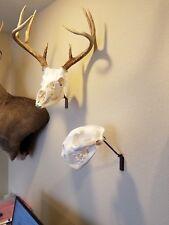 European Skull Mount Swivel Bracket