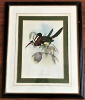 "JOHN GOULD - ""AZARAE TOUCANS""  PRINT LITHO 1852 - 1854 2nd Ed. HAND COLORED RARE"