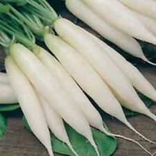 Vegetable Radish Long white Icicle Appx 200 seeds