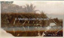 PUERTO RICO COCO PALMS REAL PHOTO