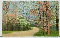 GA Dogwood Trees in Bloom Atlanta Georgia 1947 to New Athens Ill Postcard I12