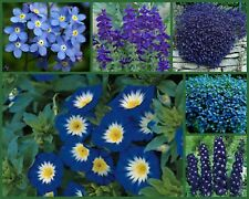 """I've Got the Blues Too"" Blue Flowers Special, 6 Full Size Packs, Blue Flowers!"