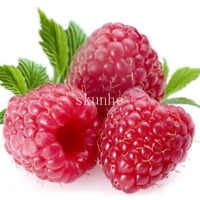 300 PCS Seeds Giant Red Raspberry Bonsai Garden Fruit Plants Juicy And Delicious