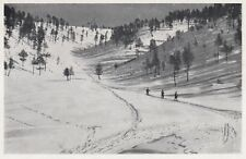 D6852 Altipiano di Folgaria - Veduta fra le pinete - Stampa d'epoca - 1930 print