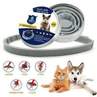 38cm Adjustable Pet Dog Cat Anti Insect Flea and Tick Collar 8 Month Protection