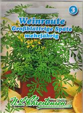 Weinraute 'Großblättrige Späte' - Ruta graveolens, Samen für 2 lfm. 490868