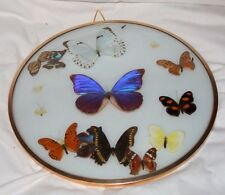 "13"" Round Domed Framed Display Case with Butterflies"
