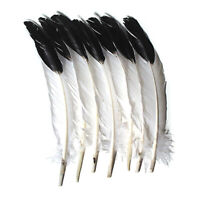 "Imitation Eagle Feathers, White & Black, 11"" to 12"", 12 Count"