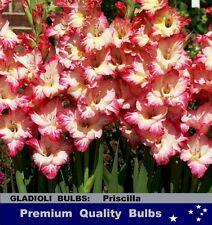FLOWER BULBS - GLADIOLI - Priscilla- 10 Bulbs