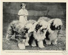 Old English Sheepdog With Little Girl 1934 Original Dog Photo Print Oes