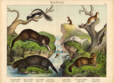 Antique Print-WEASEL-FERRET-SKUNK-OTTER-Schubert-1878